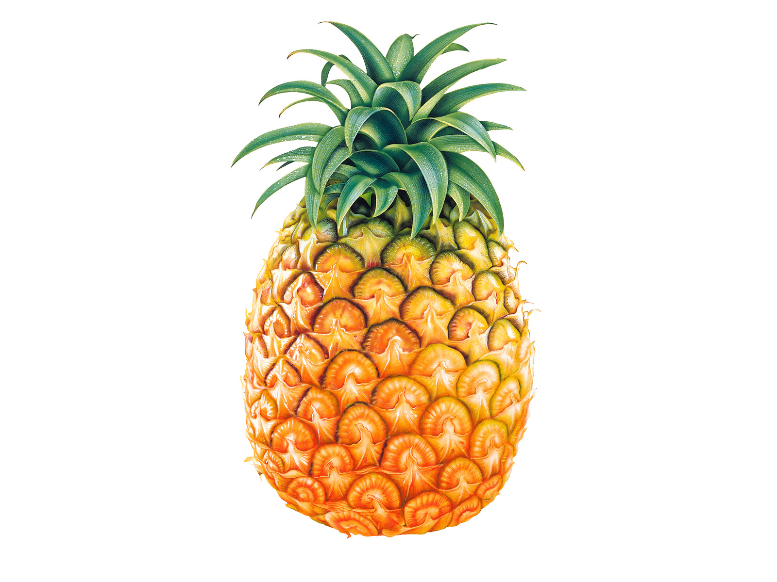 cartoon pineapple clipart
