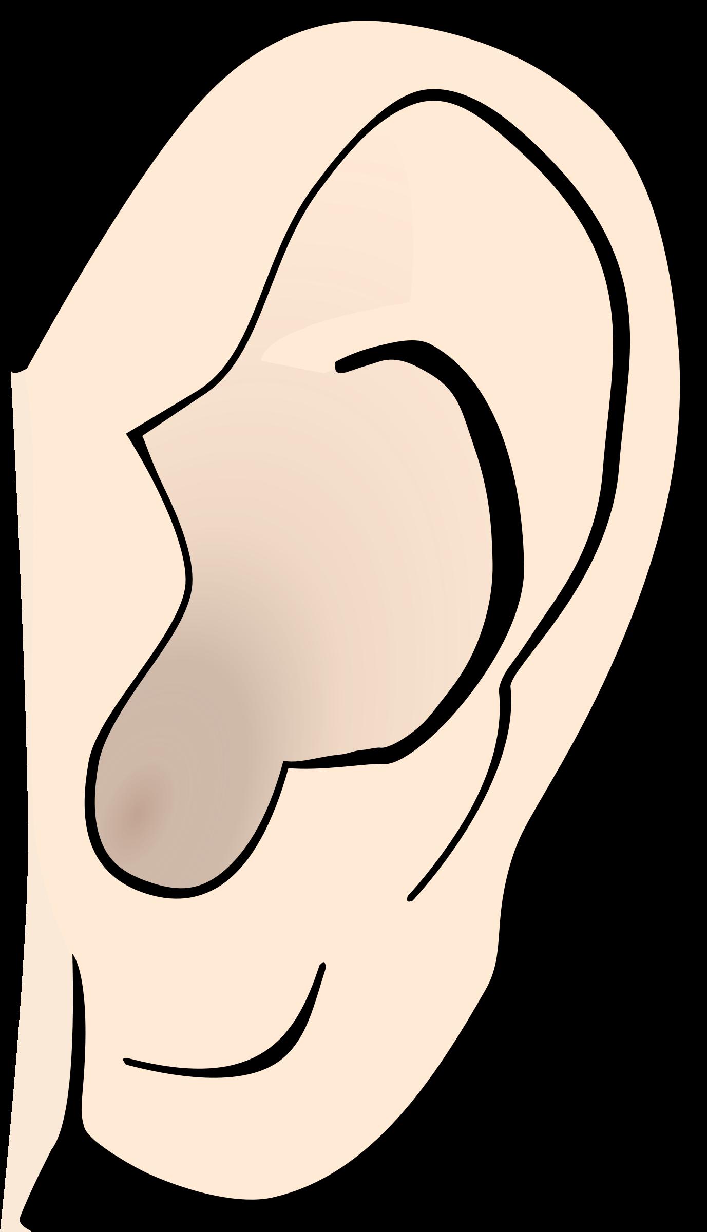 ear clipart clip art free borders image 2