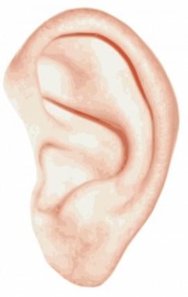 ear clipart clip art free borders image 3