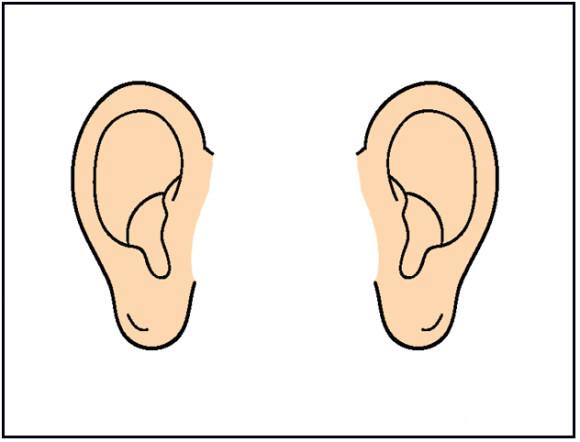 ear clipart clip art free borders image 4