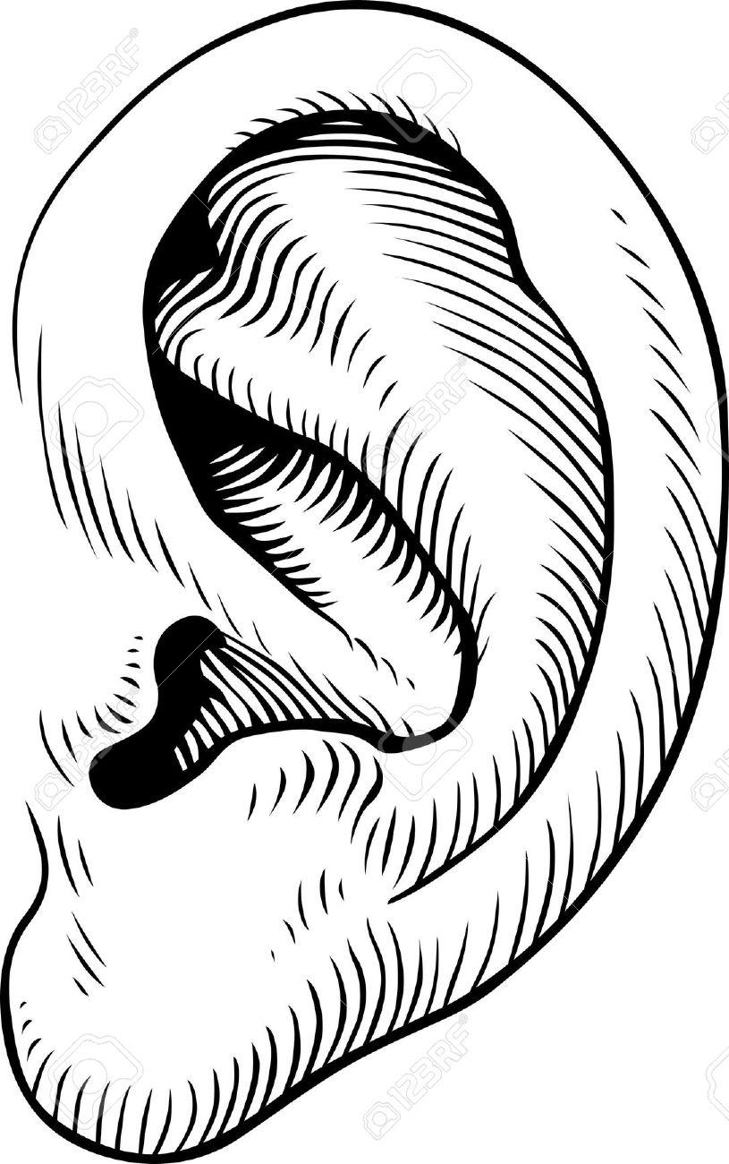 left ear clipart free clip art images image 5
