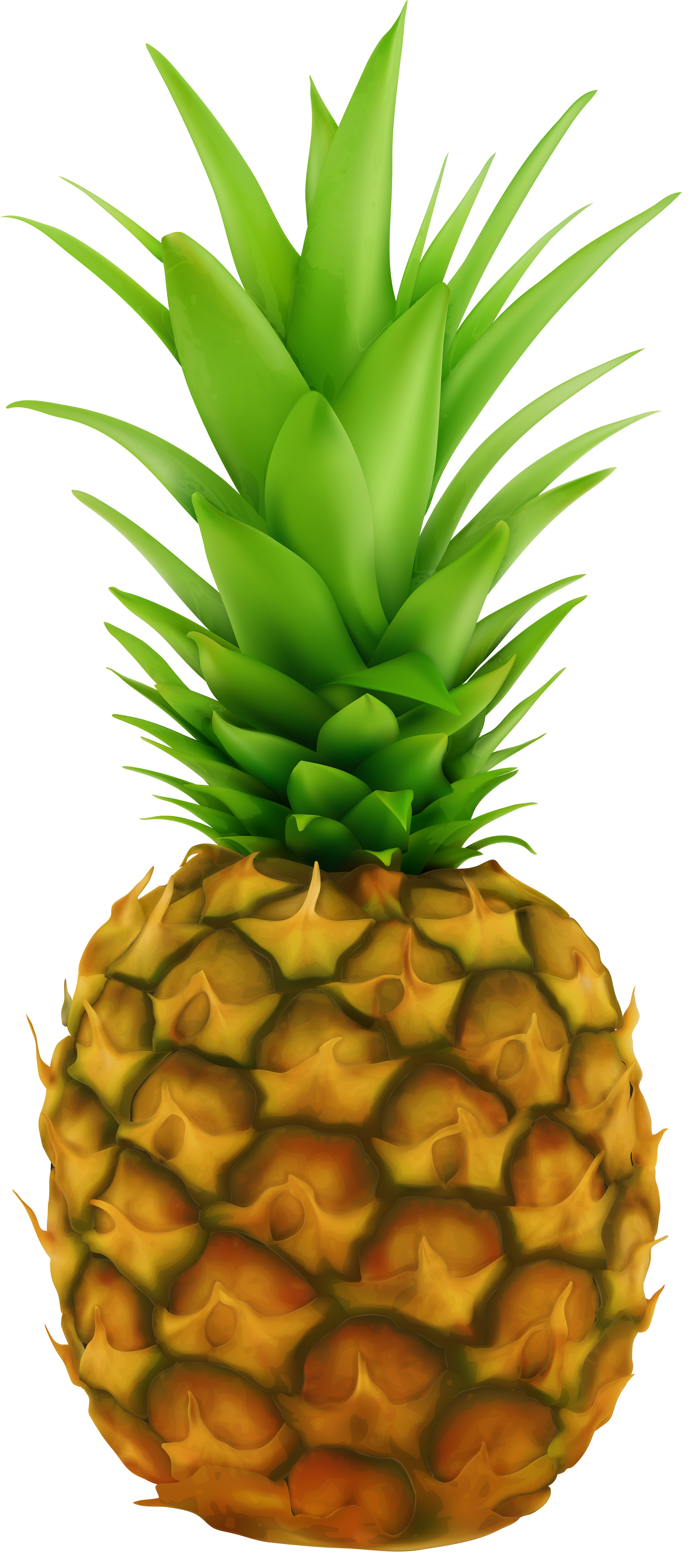 pineapple transparent clip art image