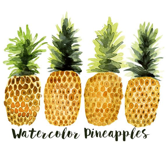 watercolor pineapple clip art pineapple