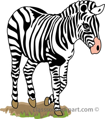 Baby zebra clipart free images