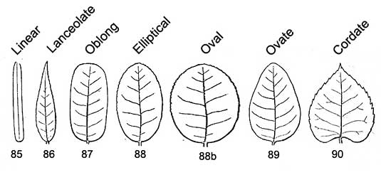 Botanical terms leaf outlines clip art