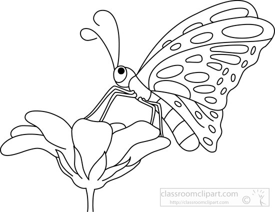 Butterfly  black and white animals butterfly black white outline 1 clipart