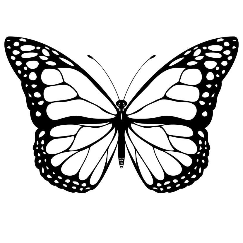 Butterfly  black and white butterfly clipart black and white 12