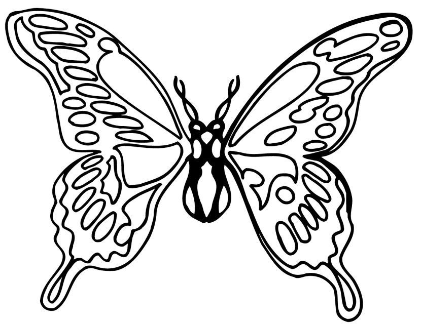 Butterfly  black and white butterfly clipart black and white 9