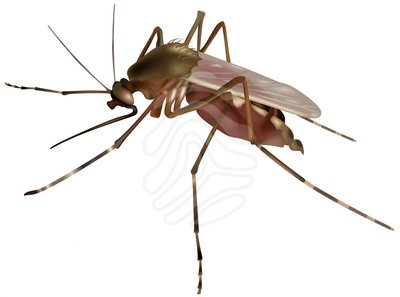 Clip art mosquito free clipart images