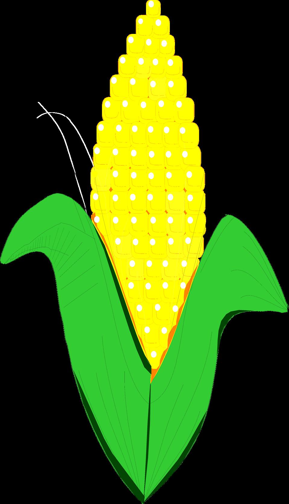 Corn clip art 2 2