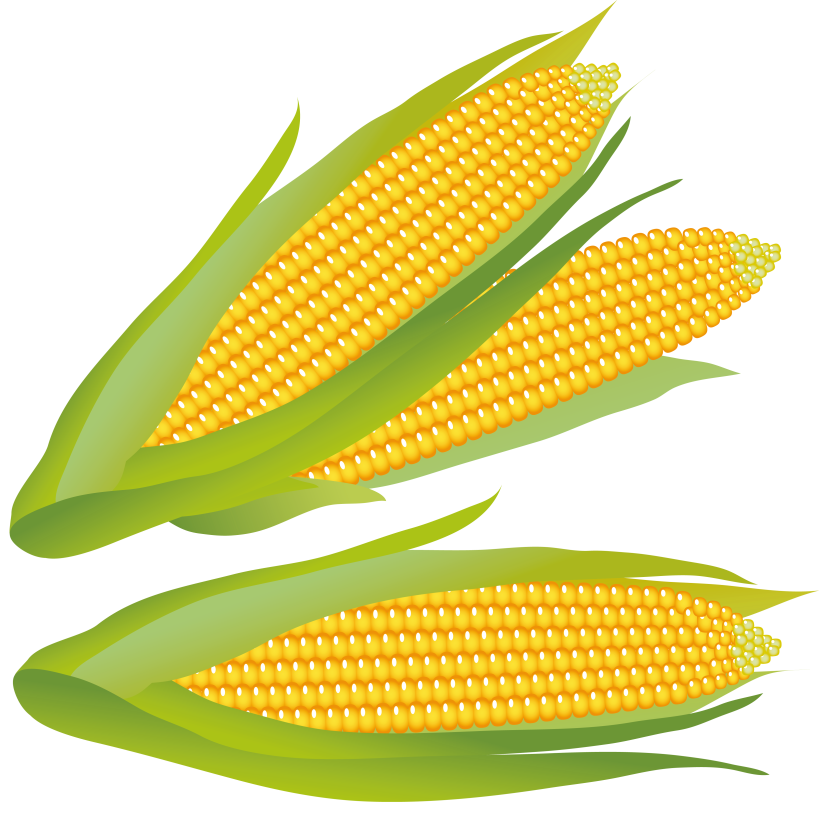 corn clip art free clipart images 3 wikiclipart iclipart coupon iclipart school