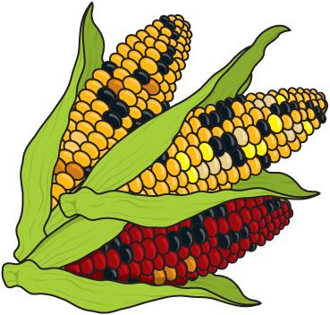 Corn clipart 5