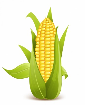 Corn clipart vegetable clip art 3