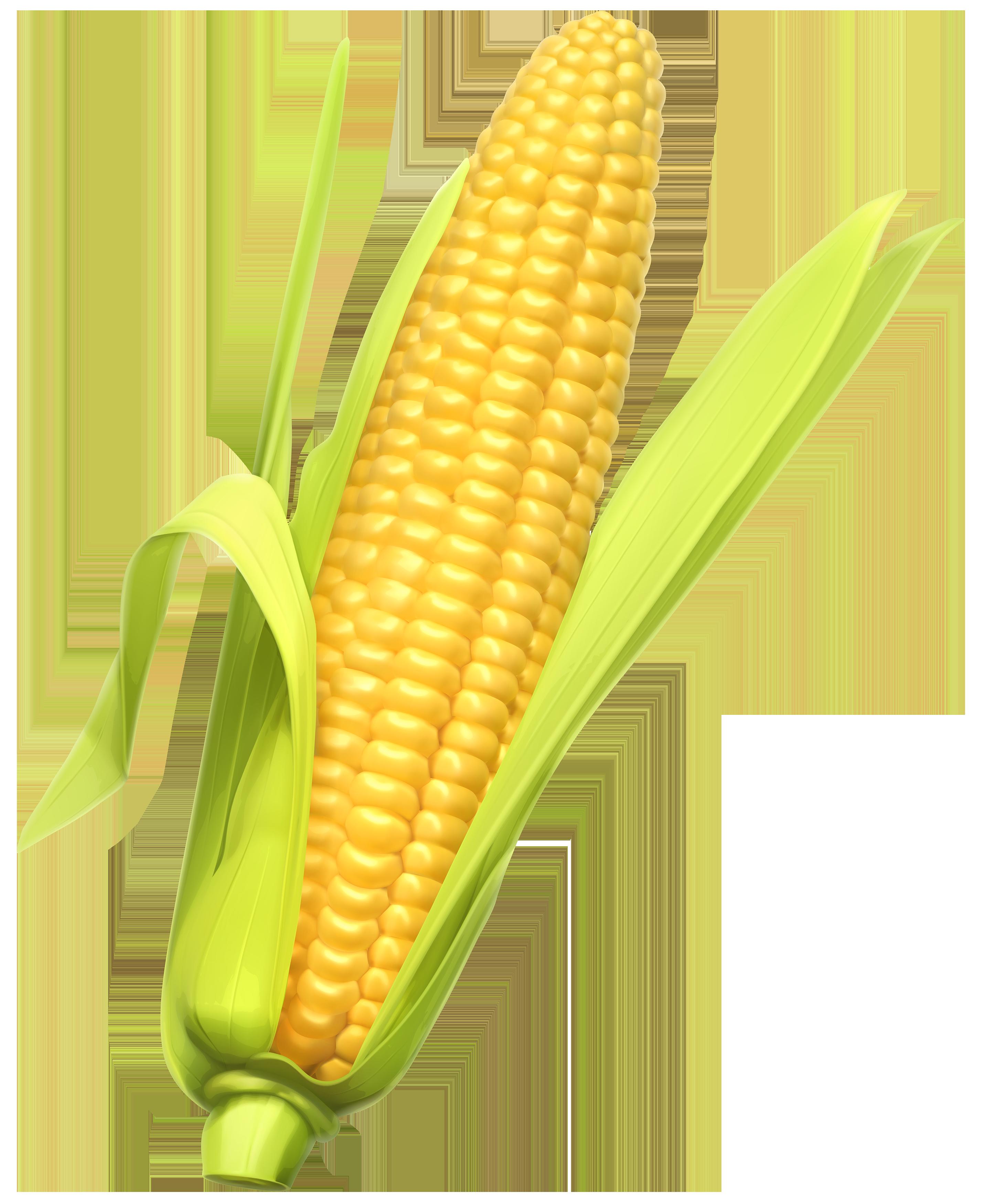 Corn clipart web