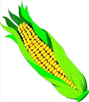 Corn free clipart