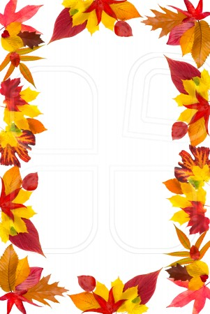 Fall border leaf border clipart - WikiClipArt