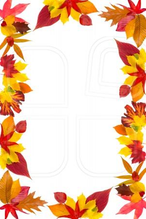 Fall border leaf border clipart
