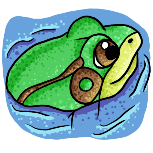 Free frog clip art drawings and colorful images 4