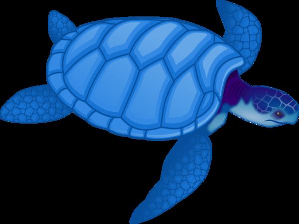 Free sea turtle clipart image 9