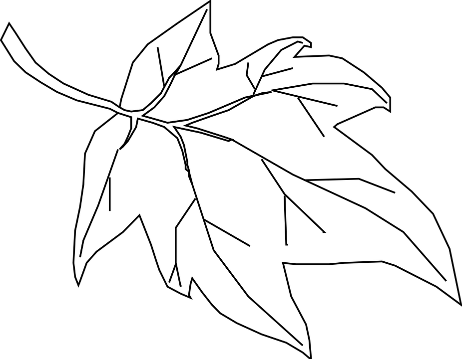Free vector graphic maple leaf outline tree nature clipart