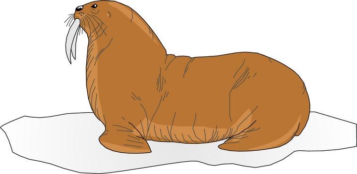 Free walrus clipart 2