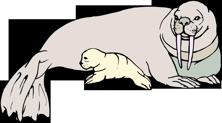 Free walrus clipart