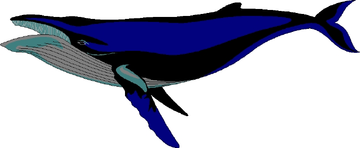 Free whale clipart 3