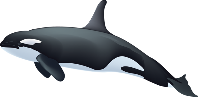 Free whale clipart 4