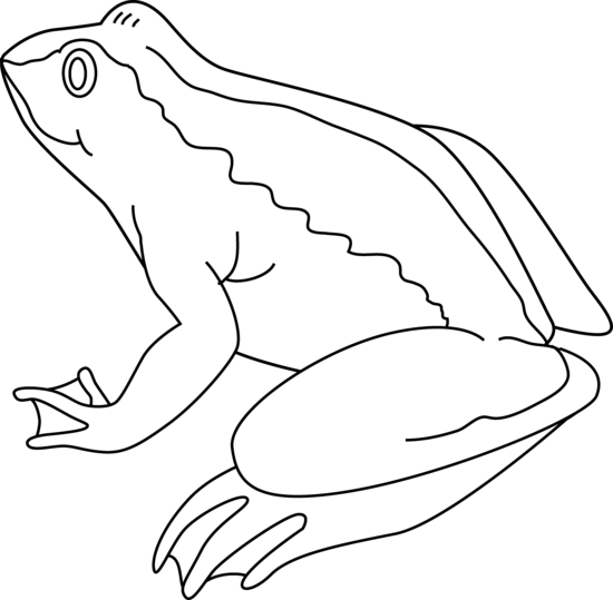 Frog  black and white frog clipart black and white 4