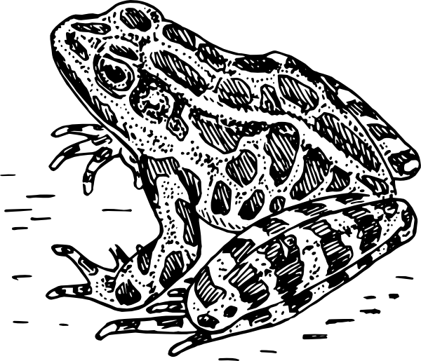 Frog  black and white frog clipart black and white 7