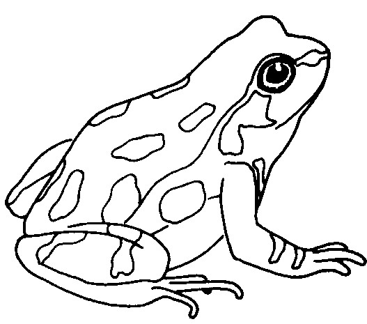 Frog clipart cliparts for you