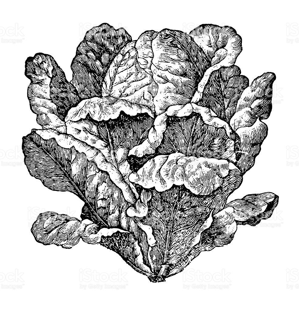 Garden salad clip art vector images
