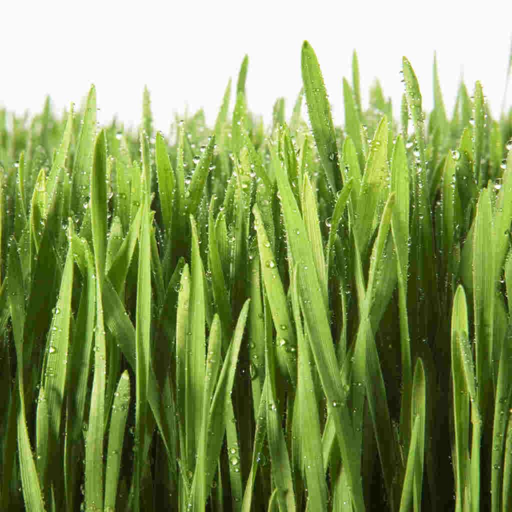 Grass clipart 10