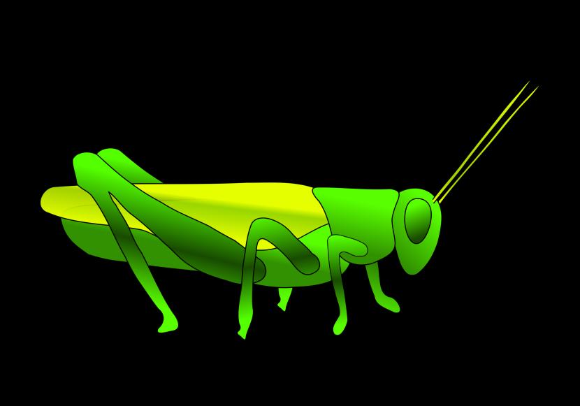 Grasshopper clipart 2 2