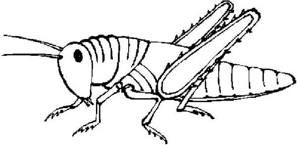 Grasshopper clipart 2 3