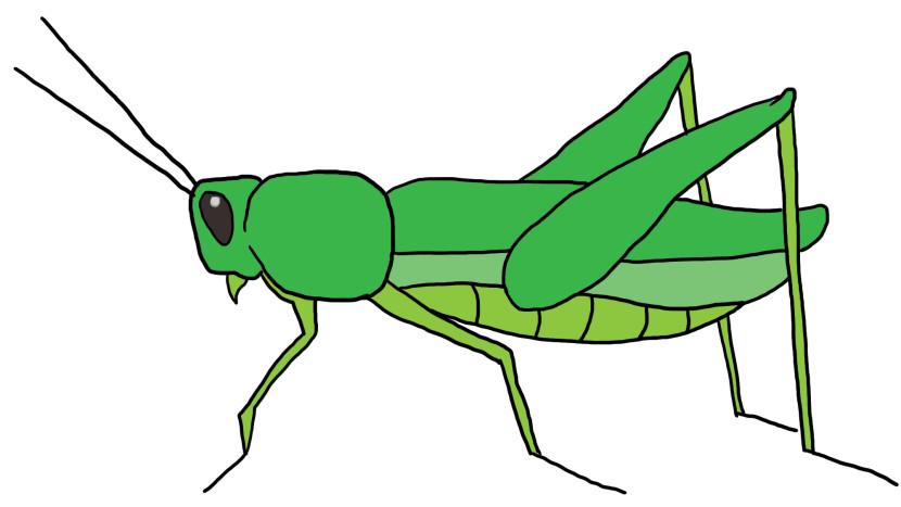 Grasshopper clipart 2