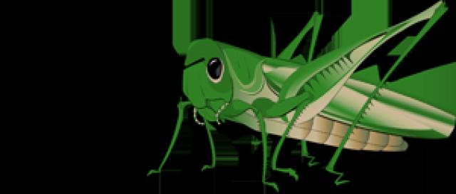 Grasshopper clipart 3