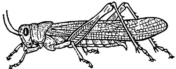 Grasshopper clipart 4 2