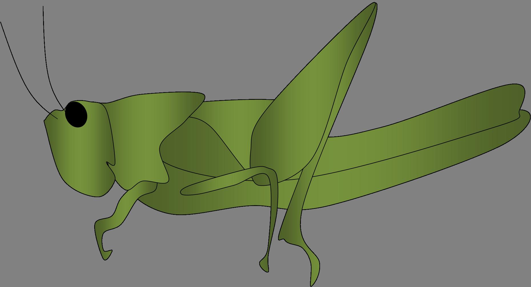 Grasshopper clipart 4 4