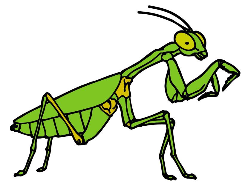 Grasshopper clipart 5