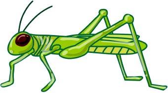 Grasshopper clipart images free 4