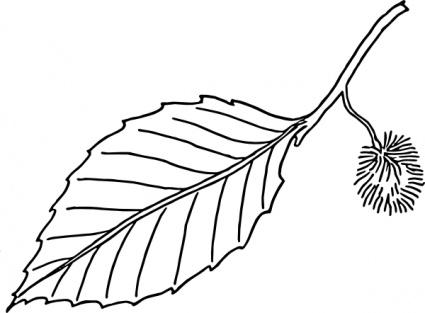 Leaf outline clipart free images 5