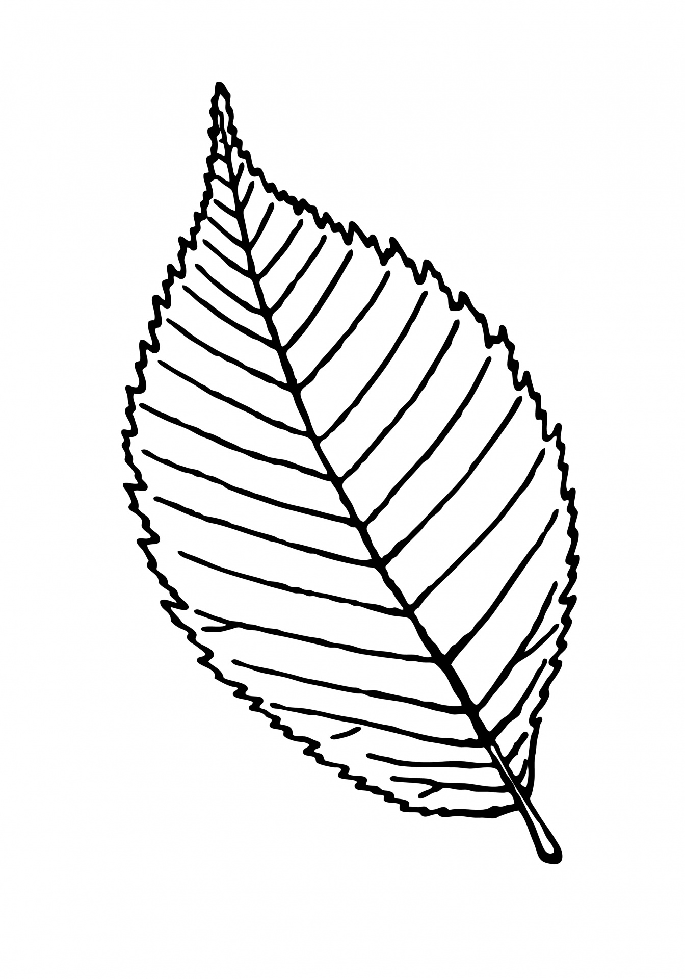Leaf outline clipart illustration free