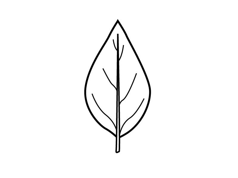 Leaf outline shape related keywords clipart