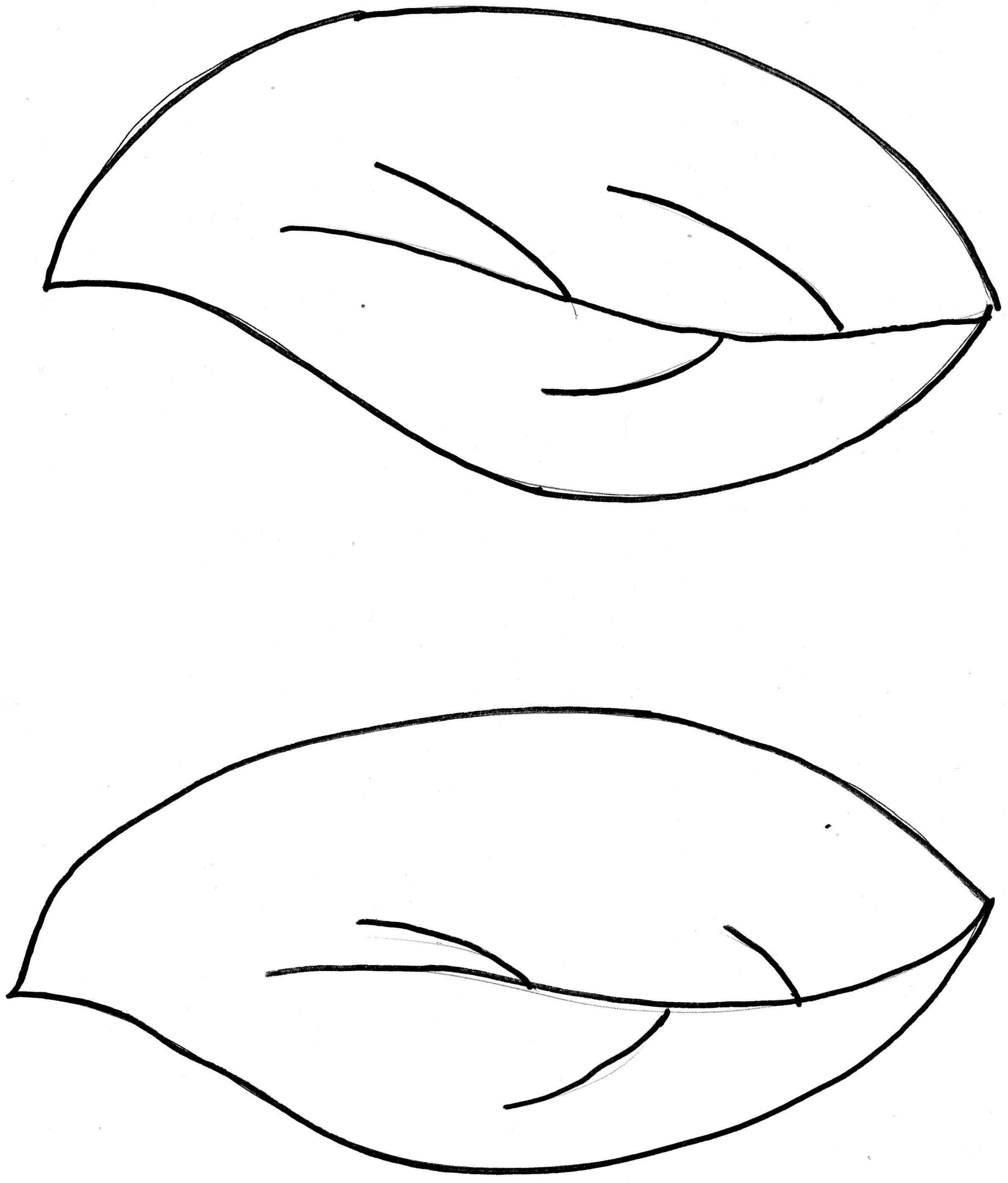 Leaf outline template clipart free to use clip art resource