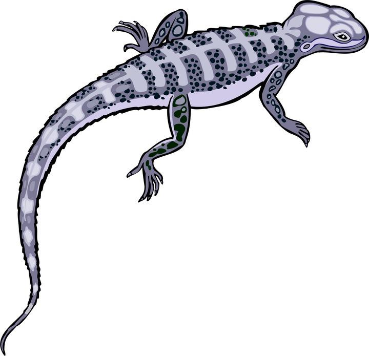 Lizard clipart 12