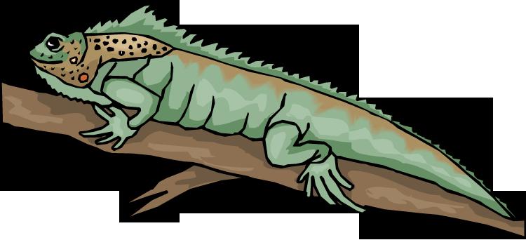 Lizard clipart 2 3