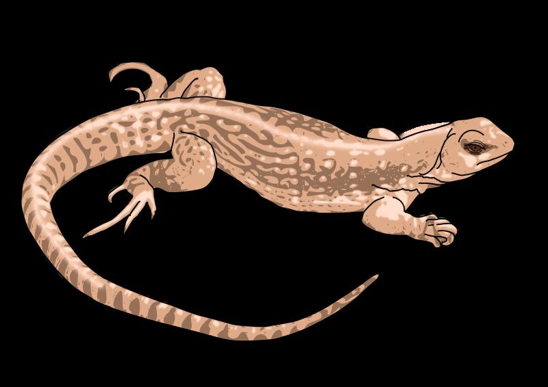 Lizard clipart 4