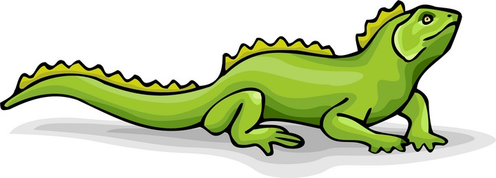 Lizard clipart 6