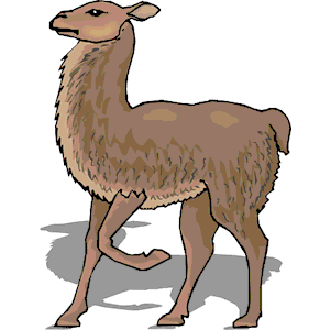 Llama clipart 5 2